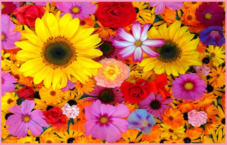flower beauty benefits